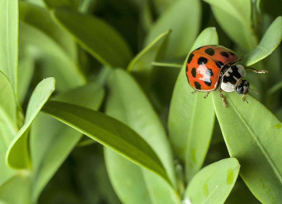 Widespread Use of Neonicotinoids Poses Risks to More Than Bees
