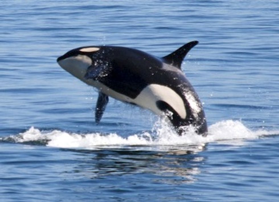 Court Rules Feds Failed to Protect Thousands of Whales and Dolphins From Navy Sonar