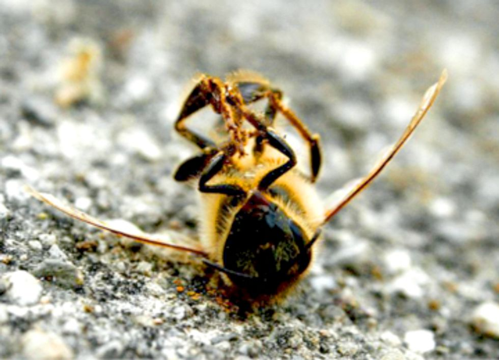 Pesticides to Blame for Massive Bee Deaths in Minnesota