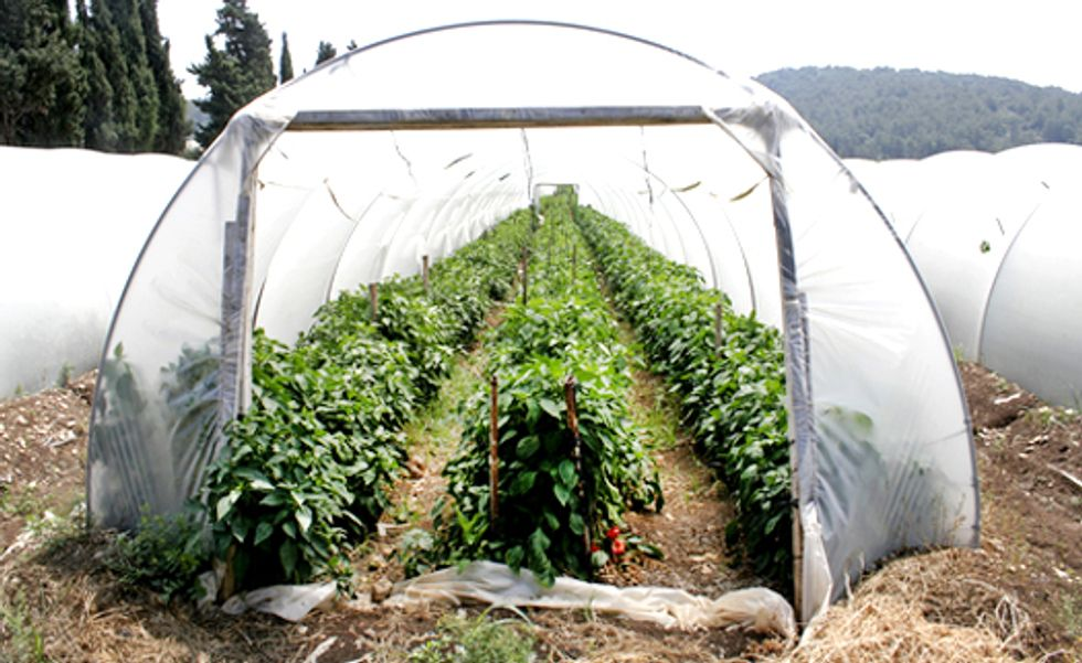 Grow Food All Winter With a Hoop House