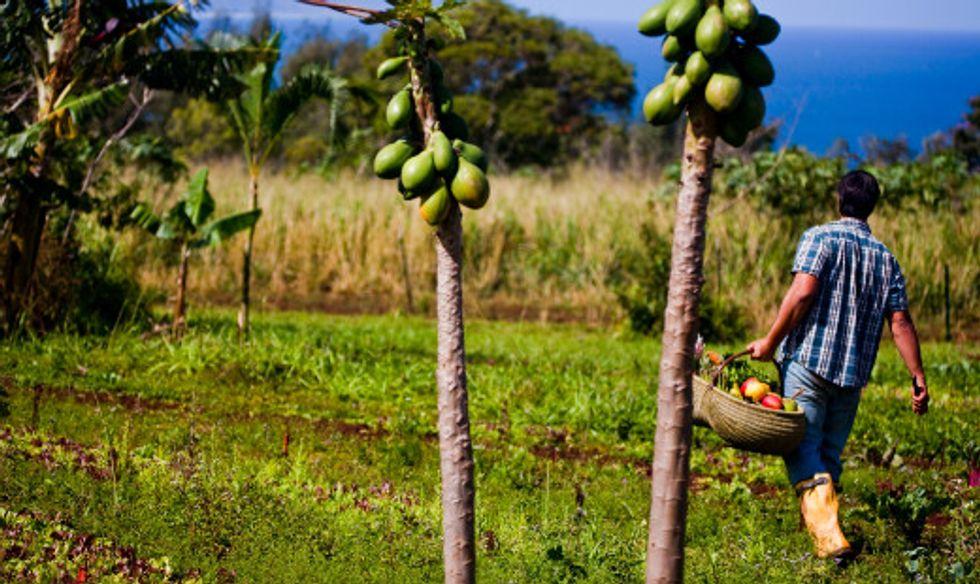 Will Hawaii's Big Island Ban GMO Farming?