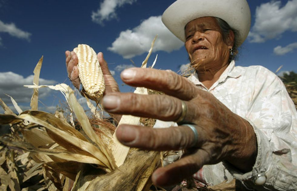 Mexico Bans GMO Corn Effective Immediately