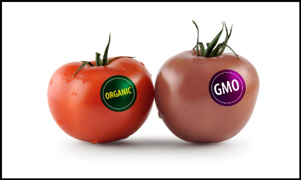 Scientists Say 'No Consensus on GMO Food Safety'