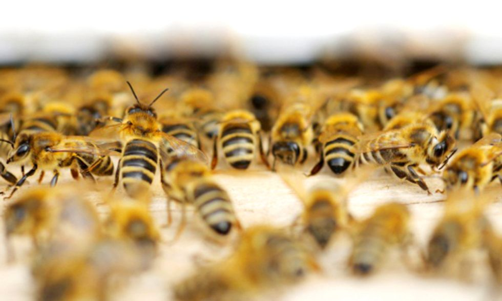 Scientists Discover Key Molecule Linking Neonicotinoids to Honey Bee Viruses