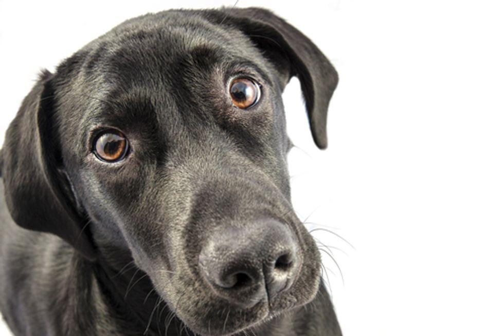 Jerky Treats Kill Hundreds of Dogs Exposing Need to List Country of Origin