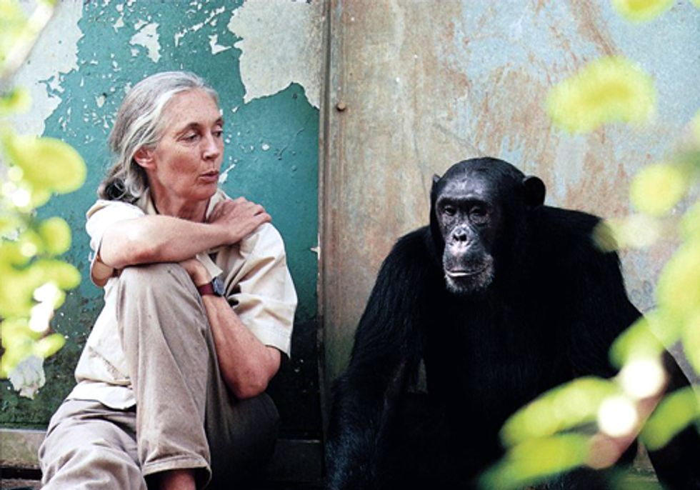 Jane Goodall Institute Revolutionizes Chimpanzee Protection With High-Tech Tools