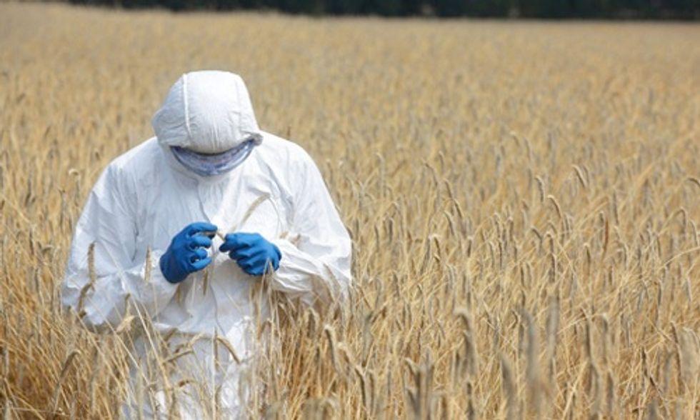 Washington Voting Down Initiative 522 to Label GMO Foods