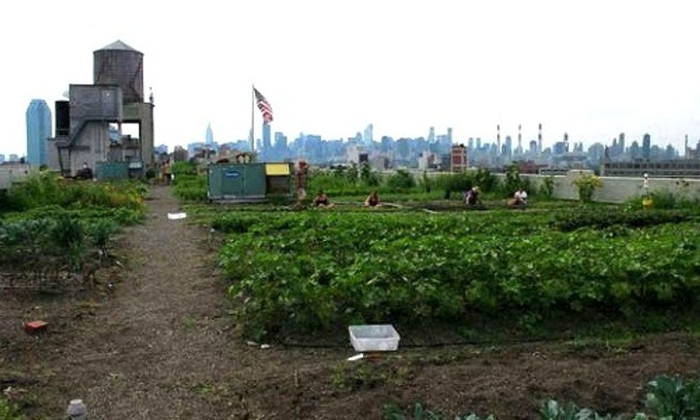 10 Urban Farming Projects in New York City