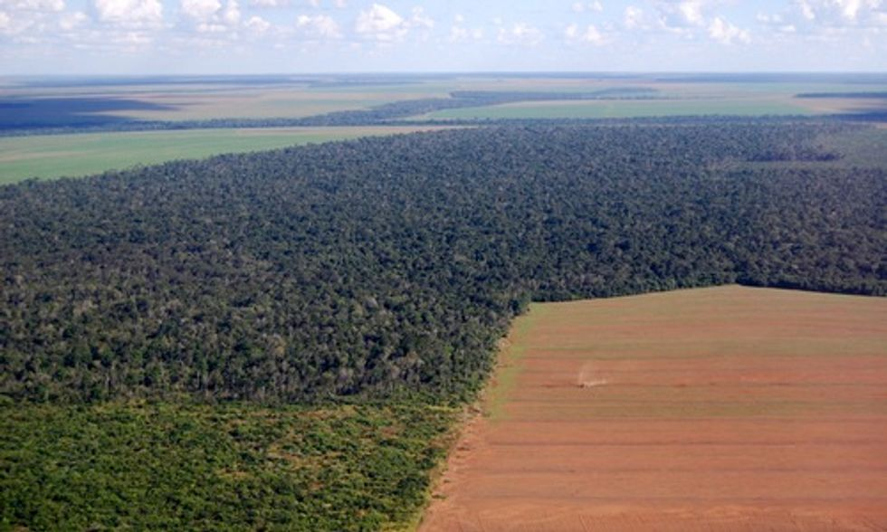 How Eating Meat Increases Demand for Soybeans and Threatens the Amazon
