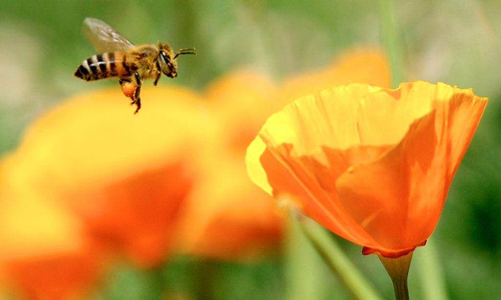 Pesticide Companies Sue EU Commission for Protecting Pollinators
