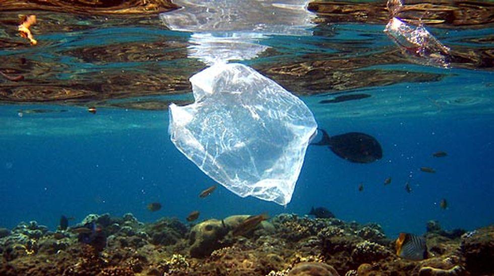 Plastic Debris in Oceans Spawns 'Plastisphere' of Microbes