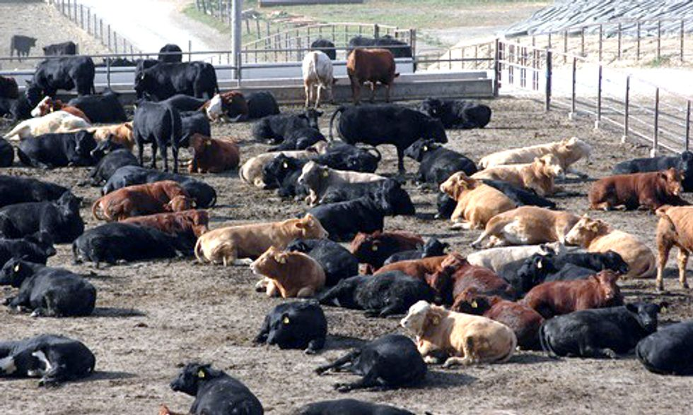 New Label Tells Consumers if Meat is Free of Growth-Enhancing Drugs