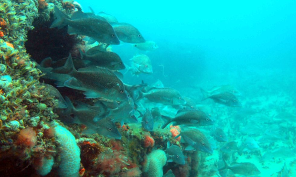 Could Artificial Reefs Help Restore the Gulf After Years of Damage From BP Oil Spill?