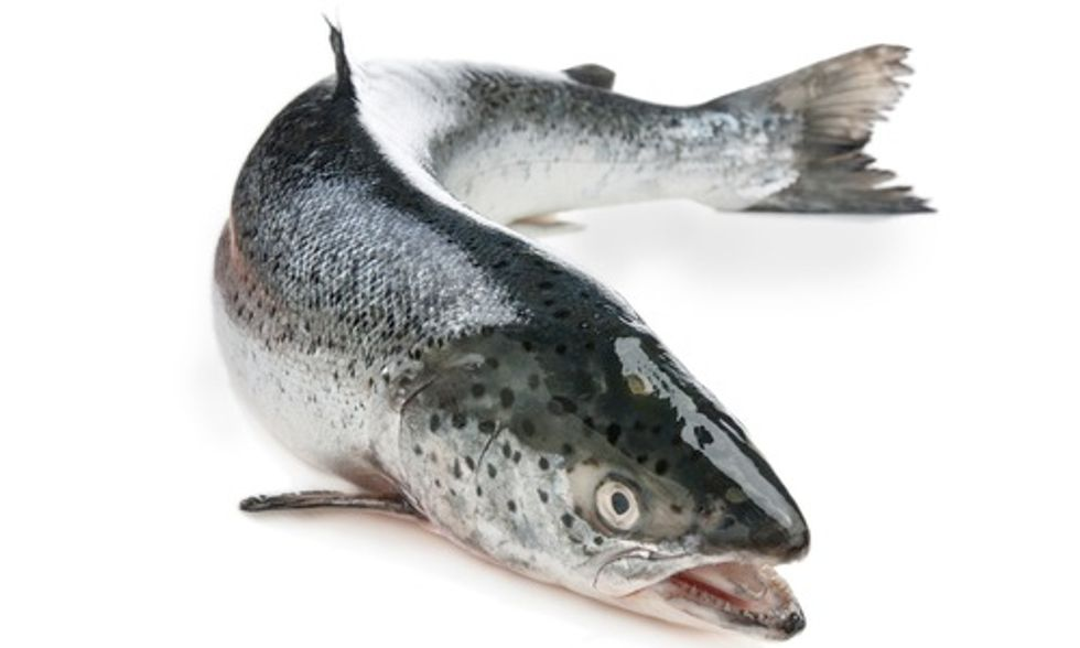 AquaBounty's Experimental GMO Fish Operation Puts Wild Salmon, Environment at Risk