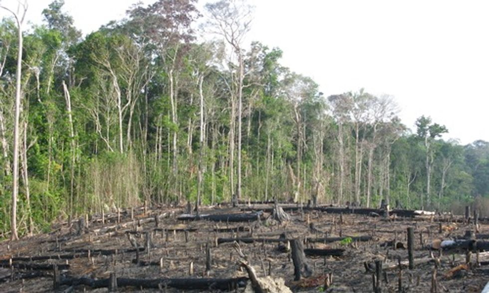 U.S. Banks Financing Rainforest Destruction for Palm Oil Plantations