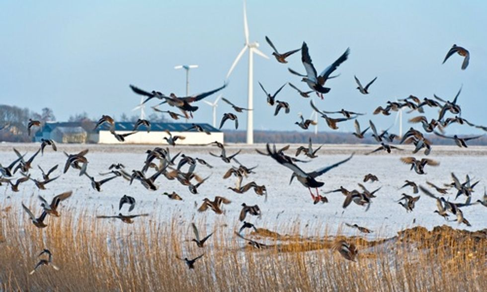 Wind Energy Company Fined $1 Million in First-Ever Settlement Over Bird Deaths Caused by Turbines