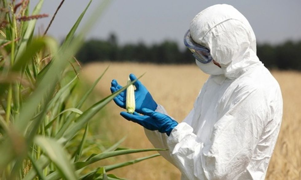 Can Genetically Modified Foods Trigger Gluten Sensitivity?