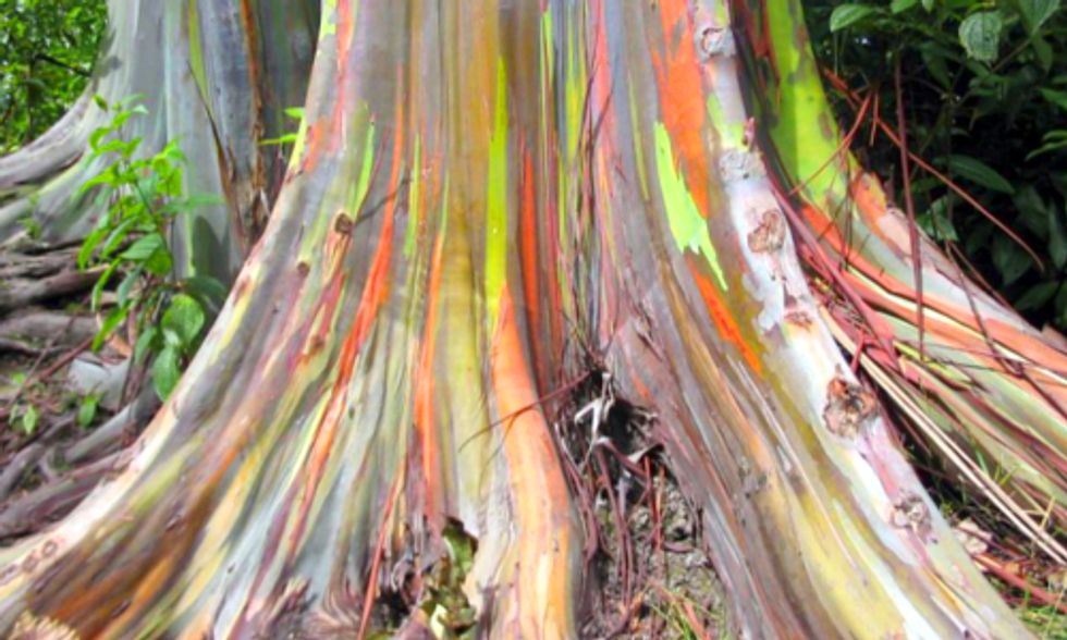 5 of the World's Most Amazing Trees