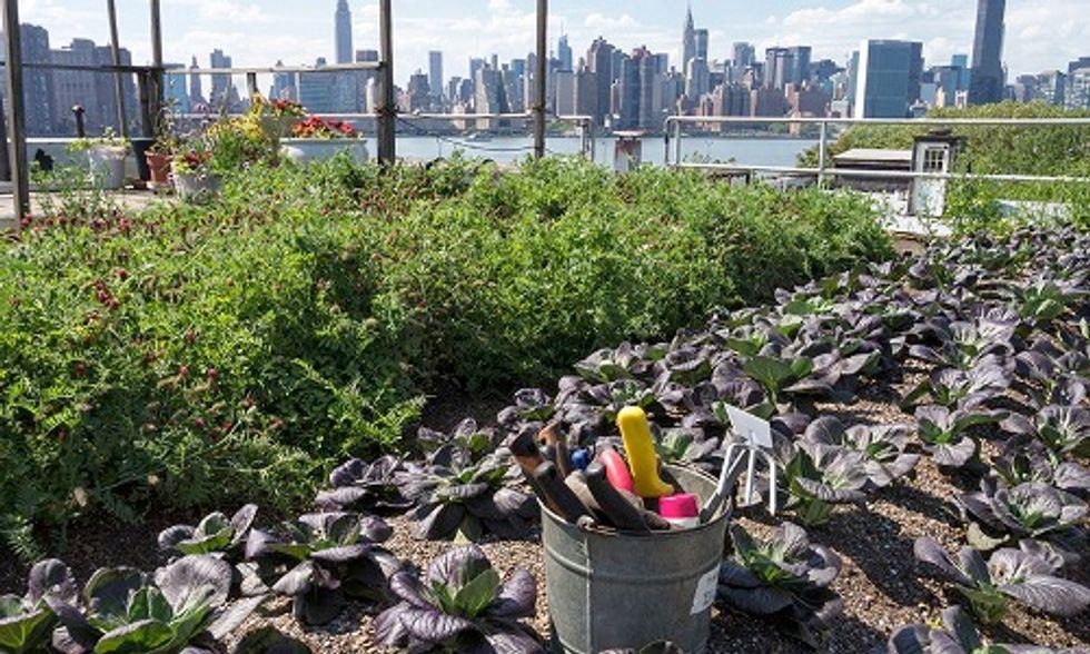 7 Ways to Reduce Toxic Soil Substances in Urban Gardens