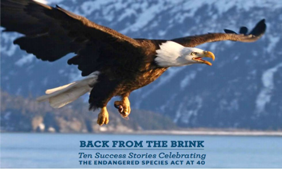 10 Success Stories Thanks to the Endangered Species Act