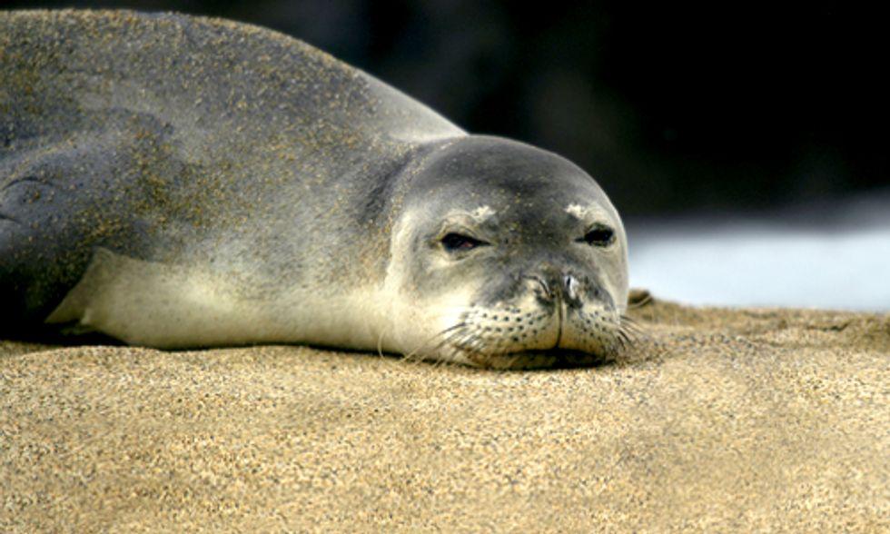 Rising Sea Levels Threaten 233 Endangered Species