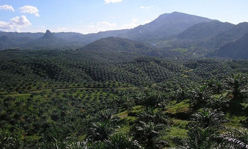 Palm Oil Giant Wilmar Promises to End Forest Destruction