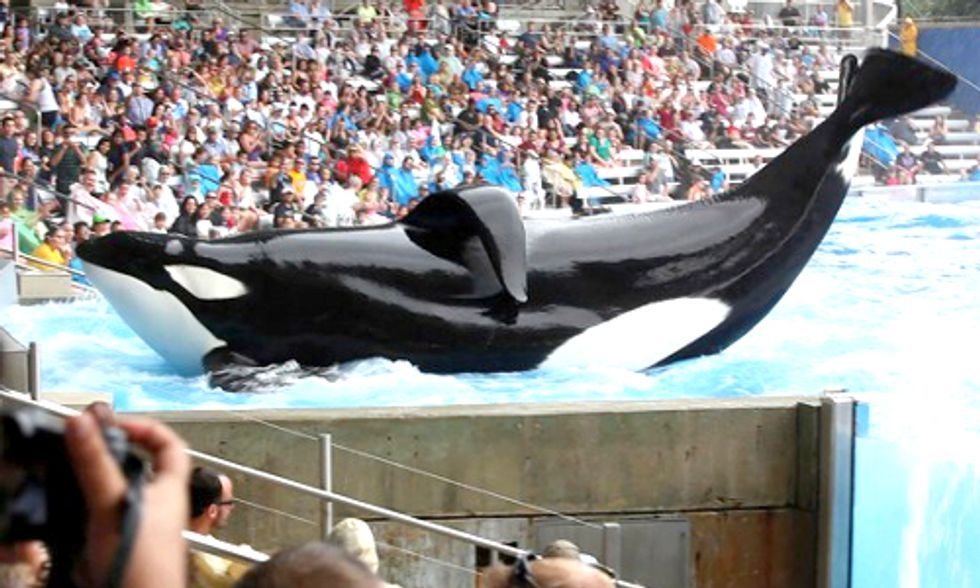 Sea World Responds to Blackfish Documentary, Sea Shepherd Sets the Record Straight