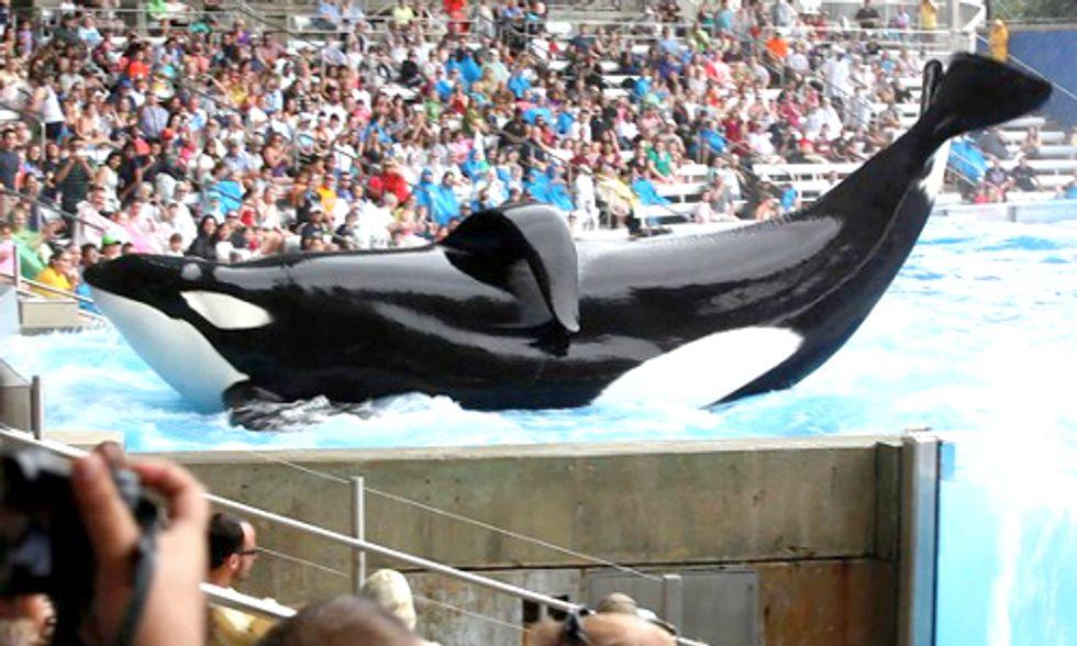 Sea World Responds to Blackfish Documentary, Sea Shepherd Sets the Record Straight