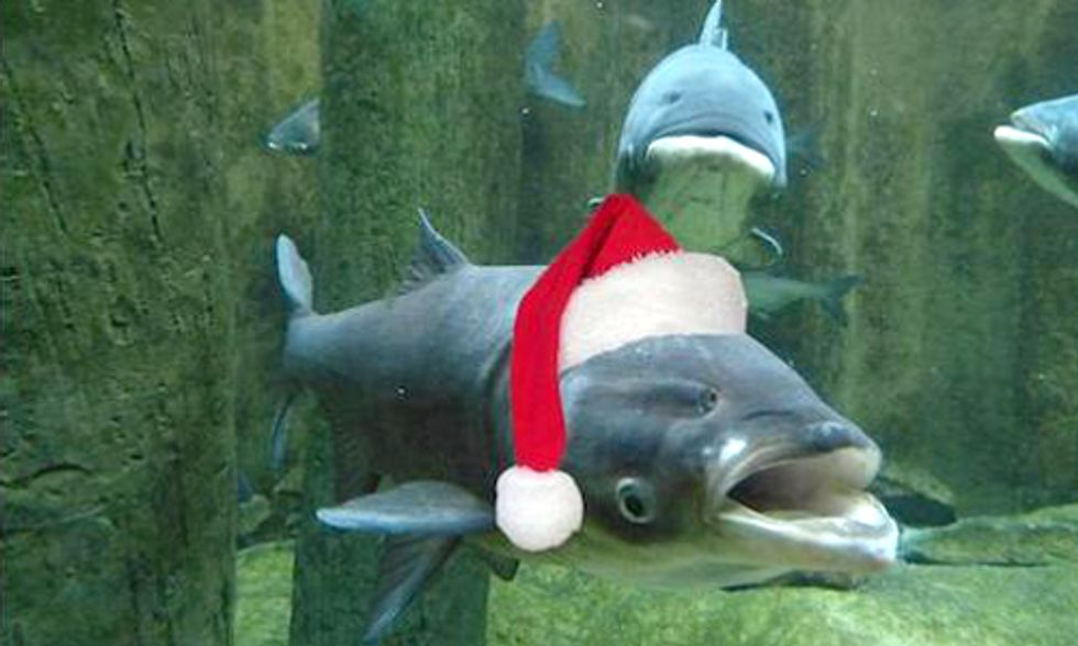 The Twelve Days of Invasive Species in the Great Lakes