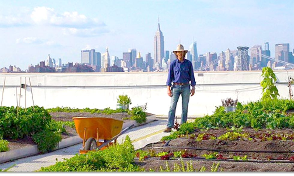 Rooftop Farm in New York City Grows 50,000 Pounds of Organic Produce Per Year