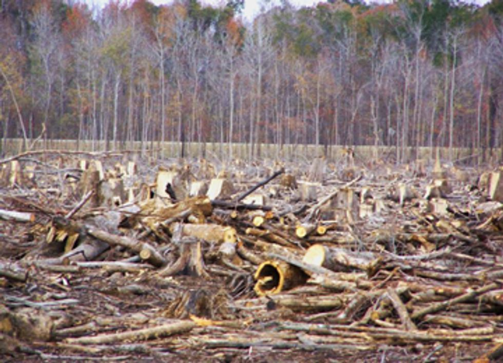 Our Forests Aren't Fuel: New Campaign Against Burning American Forests for Electricity