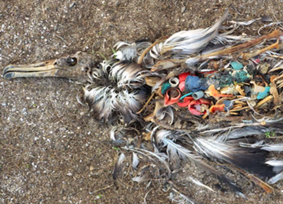 California Marine Plastic Pollution Policy Tangled Up in Committee
