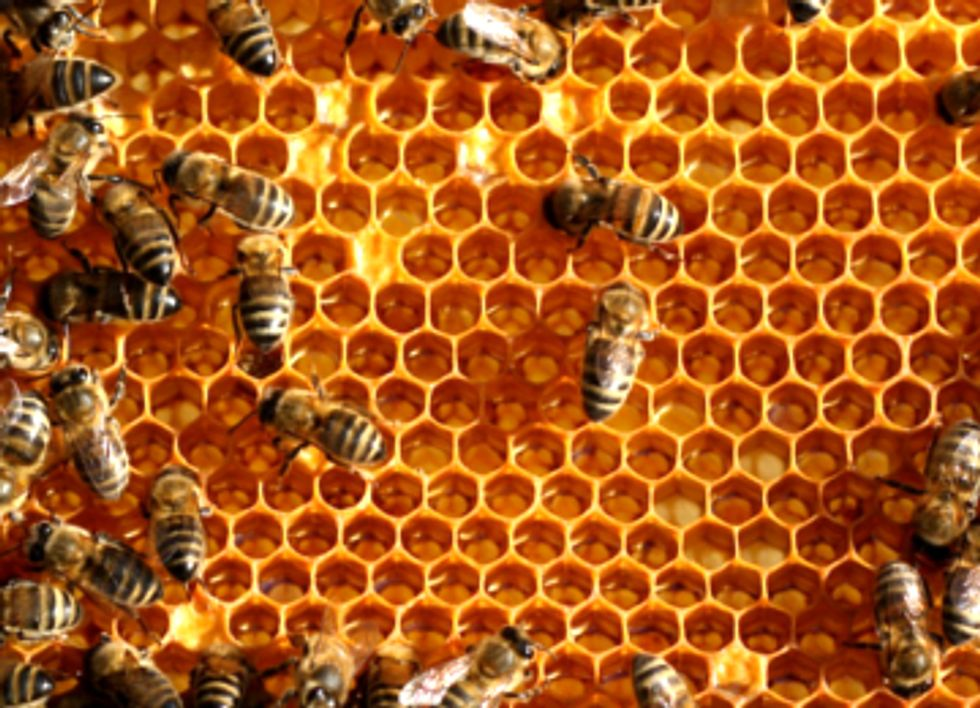 EU Flags Another Bee-Killing Pesticide While EPA Drags Feet