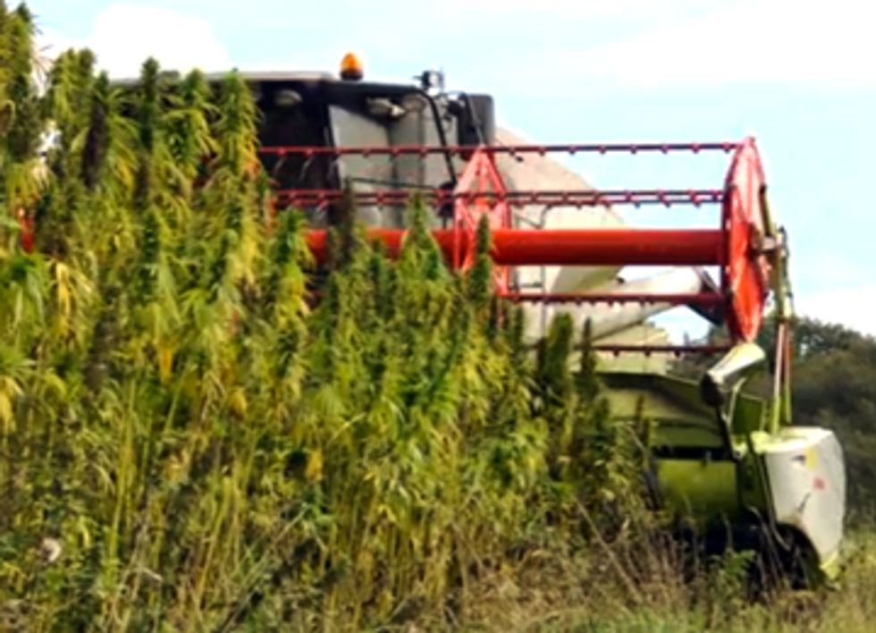Industrial Hemp: The Answer for a Greener Future