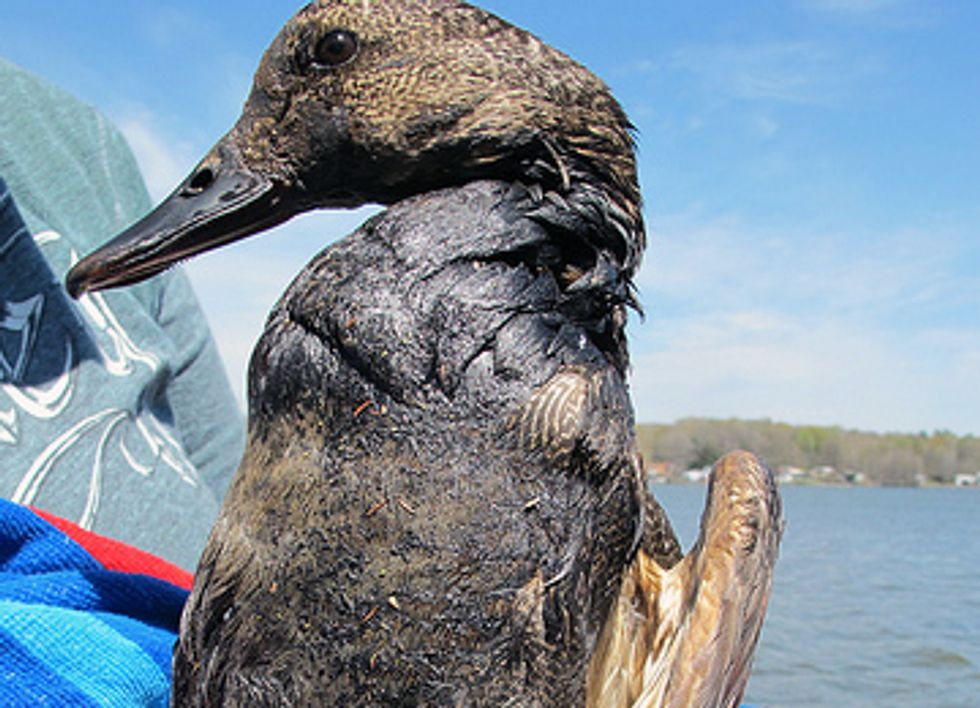 Two Months Later, Arkansas Residents Still Hurting From ExxonMobil Tar Sands Spill