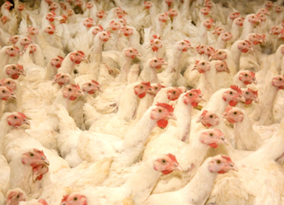 China's Growing Hunger for Meat Leads to Copycatting U.S. Factory Farms