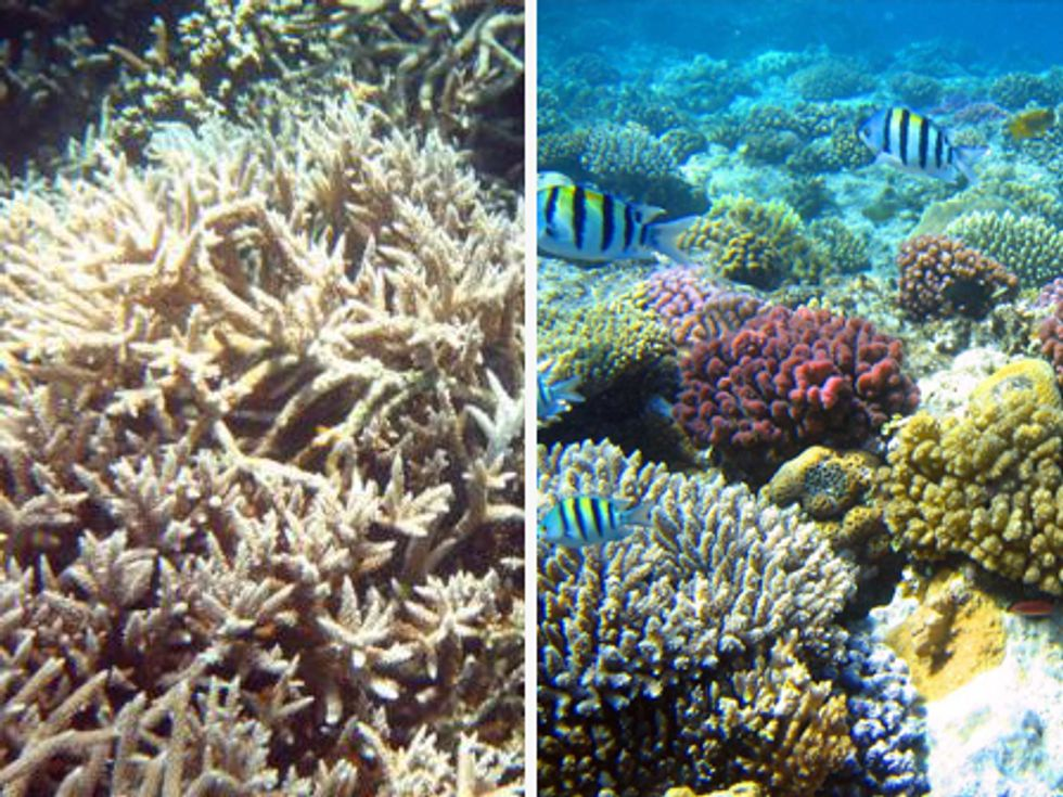 Coral Reef Ecosystems Devastated by Climate Change