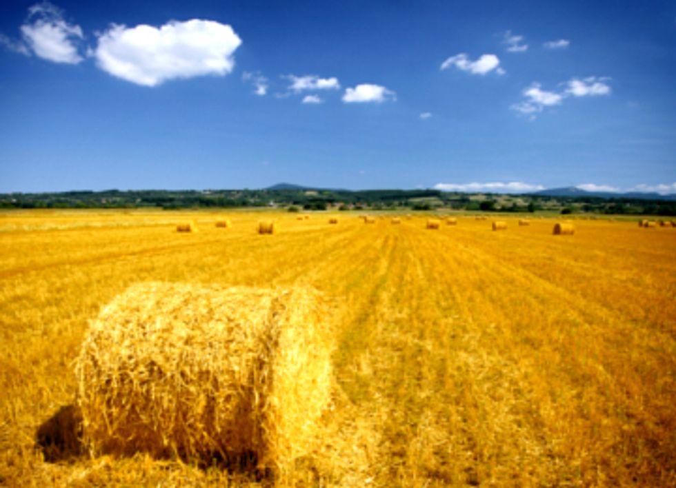 Senate to Vote on Farm Bill, Sustainable Agriculture Amendments Ignored