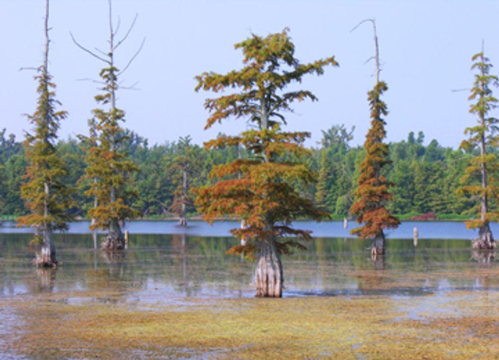 Massive Wetlands Destruction Project Still Pending