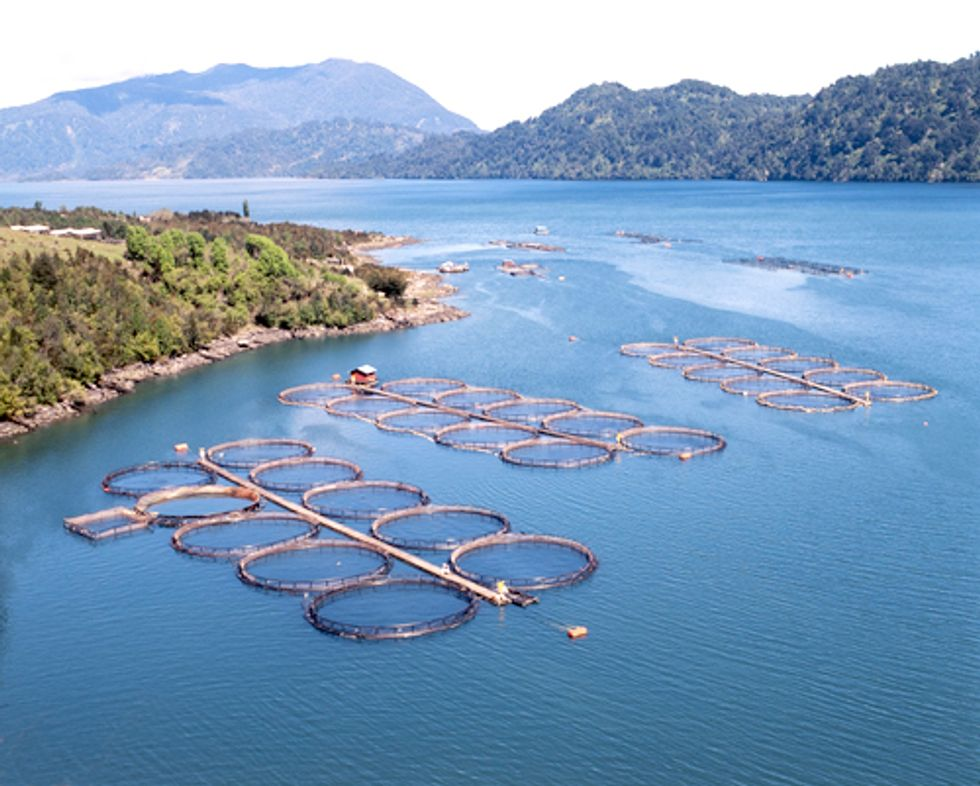 Farmed Fish Production Overtakes Beef