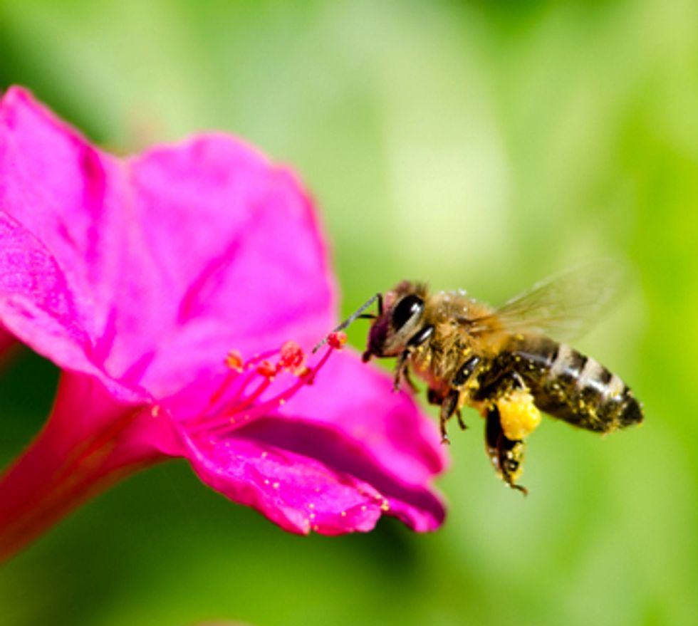 Study Finds Honey Bee Colony Losses More Than Double Since Last Winter