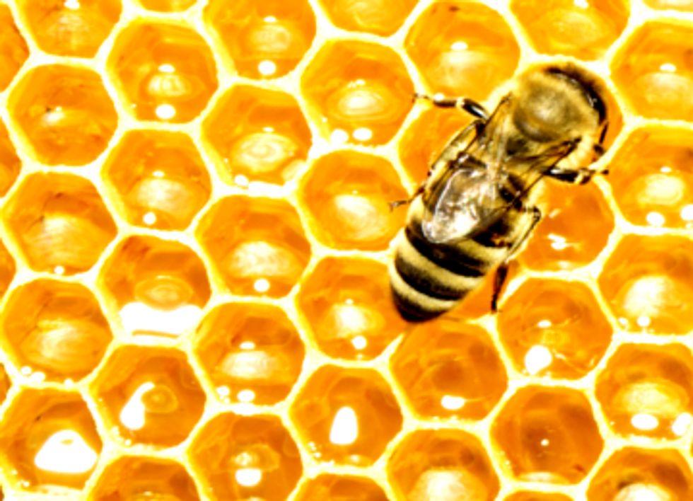 Buzz Off, Monsanto