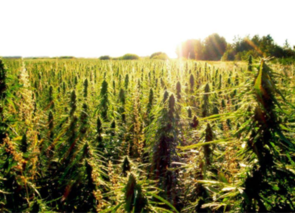 Pro-Hemp Legislation Introduced in House Farm Bill