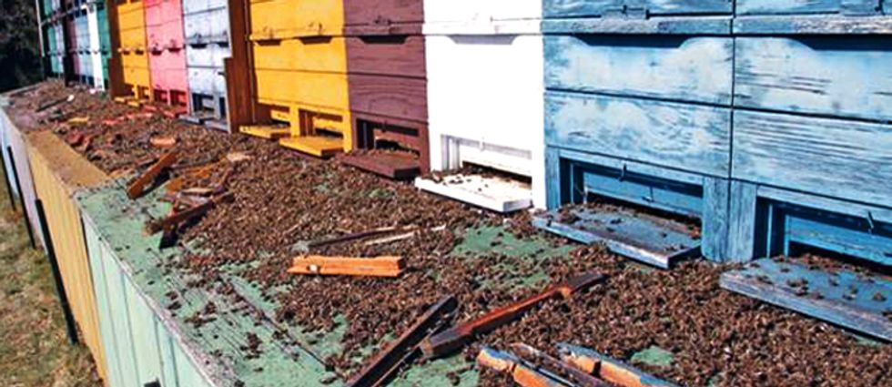 House Adds Honey Bee and Pollinator Protections to Farm Bill