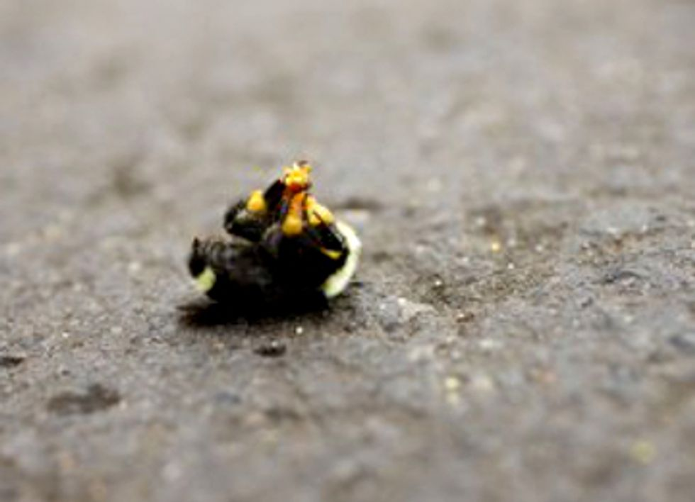 50,000 Bumblebees Dead After Neonicotinoid Pesticide Use in Oregon