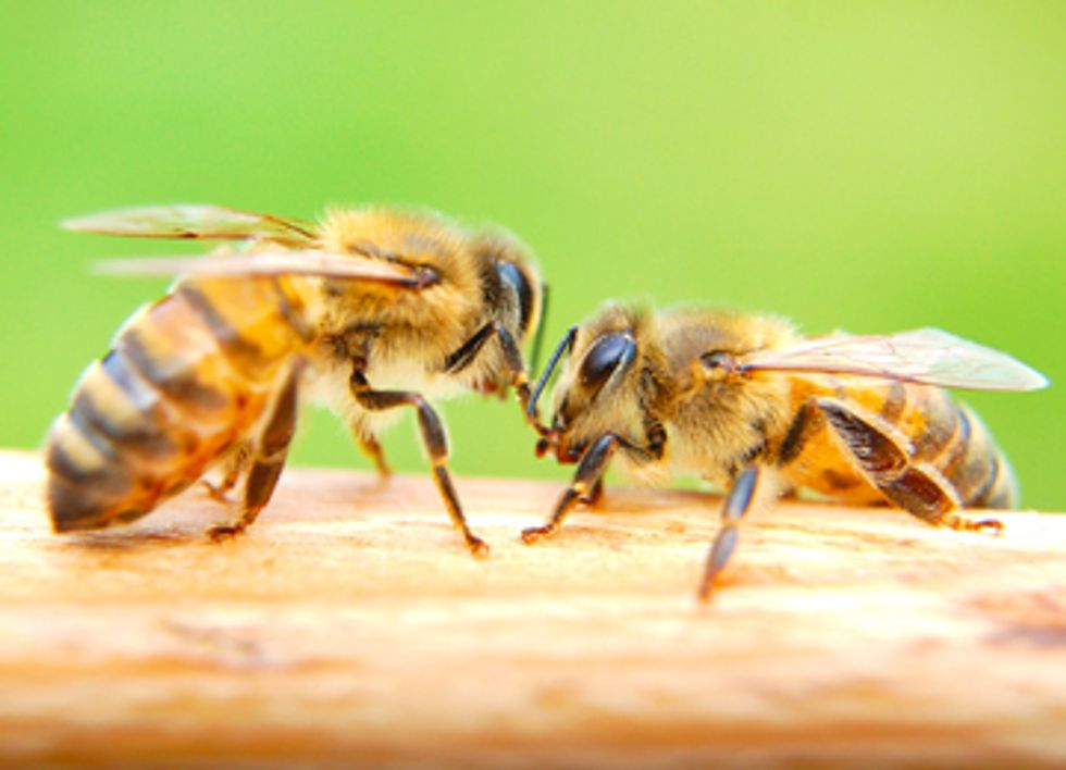 President Obama, Act Now to Save the Bees