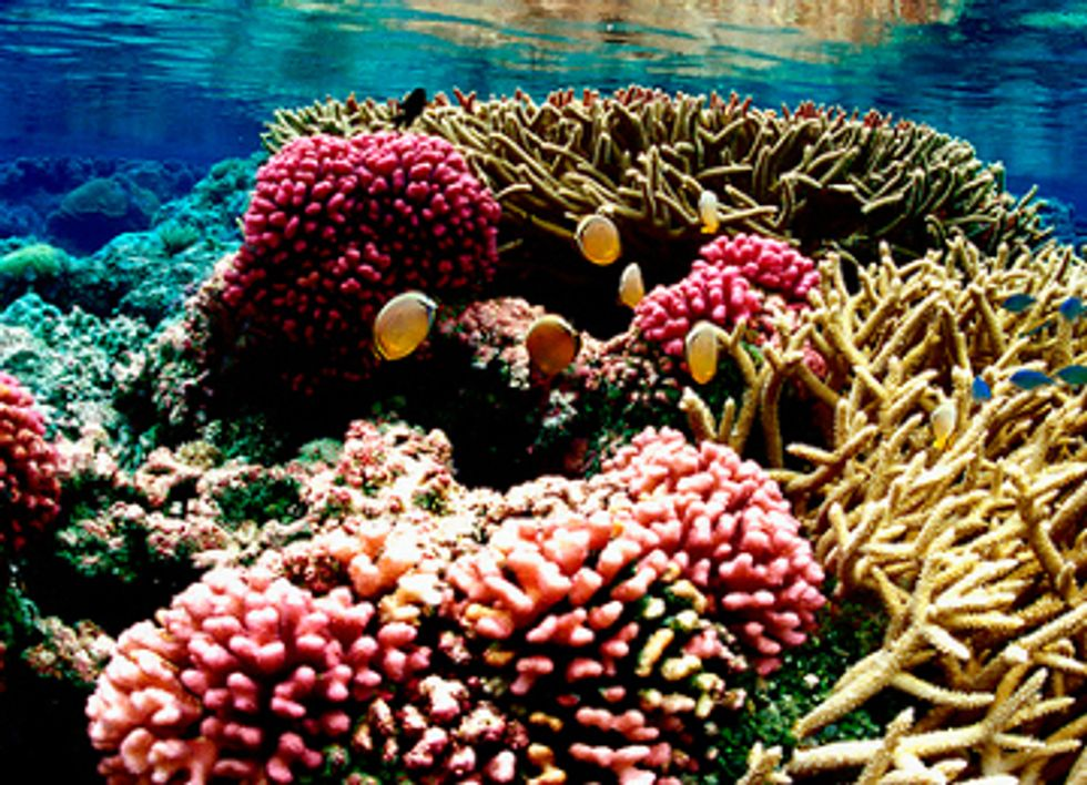 Coral Reefs Face Point of No Return