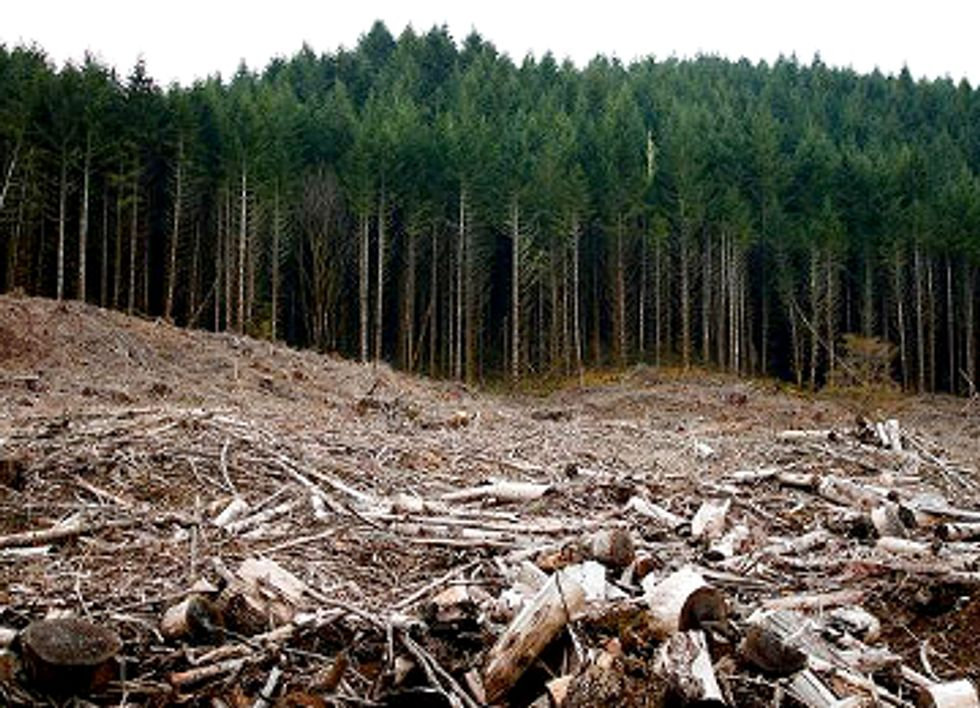 Federal Court Strikes Down EPA's Biomass Pollution Loophole