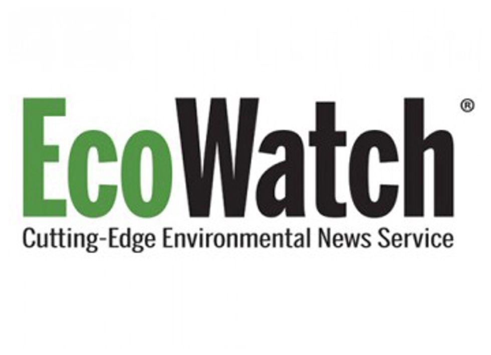 EcoWatch Is Hiring a Website Developer