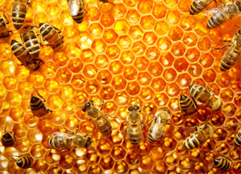 House Legislation Proposed to Ban Bee-Killing Pesticides